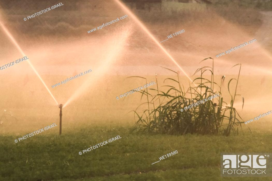 Stock Photo: field irrigation with water sprinklers Photographed in Beit Shean Valley, Israel.