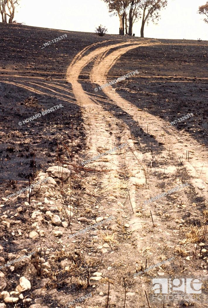 Stock Photo: view of tracks wandering through a burnt out landscape.