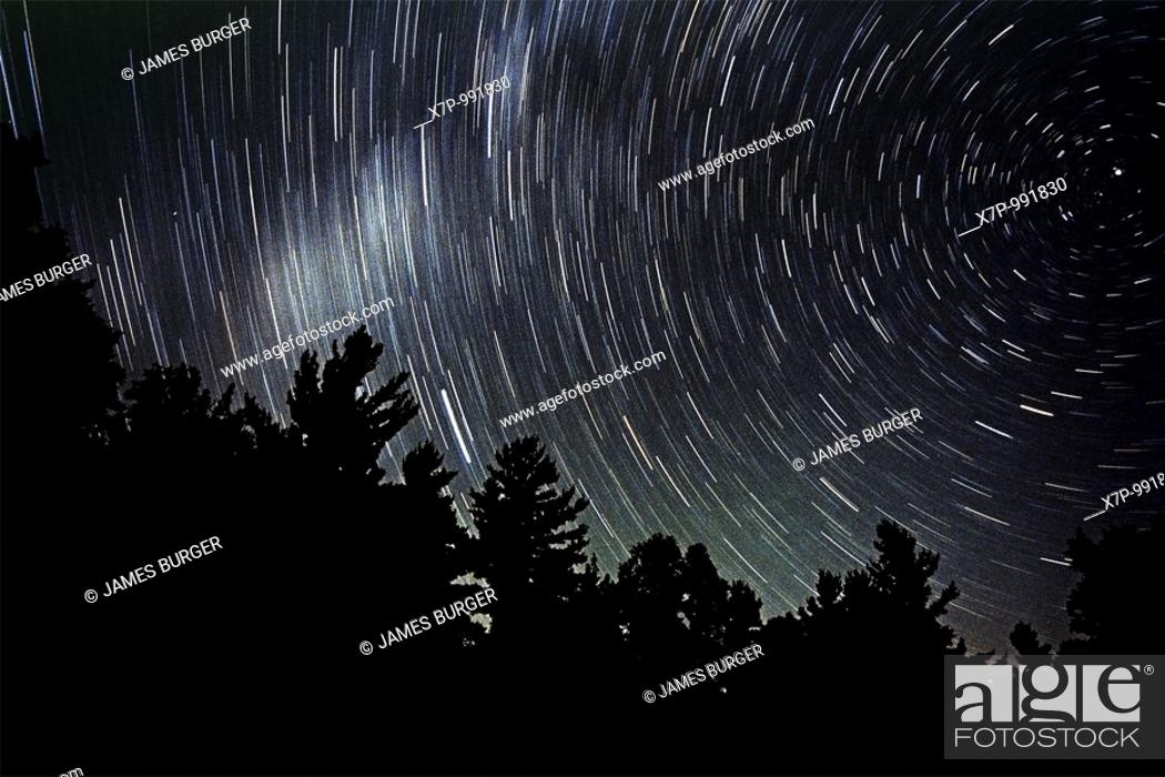 Stock Photo: Stars over evergreens.
