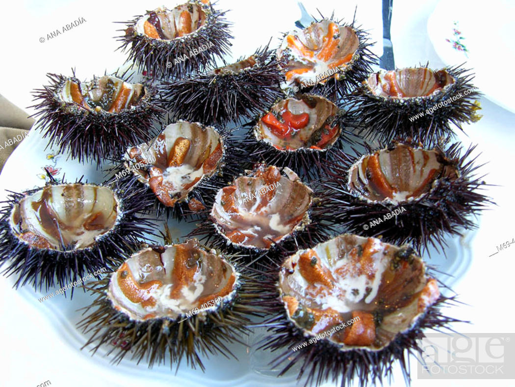 Stock Photo: Sea urchins. Cadaqués, Costa Brava, Girona province, Catalonia, Spain.