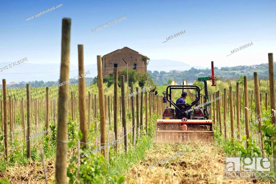 Stock Photo: a tractor plow the soil in a vineyard during spring  dugenta  province of benevento  campania  italy  europe.
