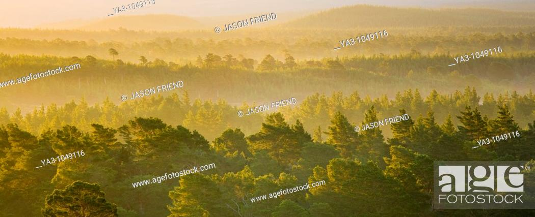 Stock Photo: Scotland, Scottish Highlands, Cairngorms National Park  Mist rising at dawn over the Caledonian Forest of the Rothiemurchus estate.
