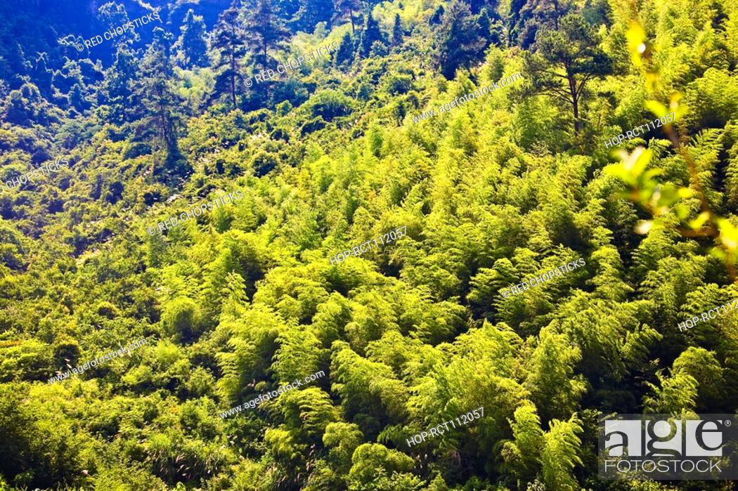 Stock Photo: High angle view of trees in a forest, Xidi, Anhui Province, China.