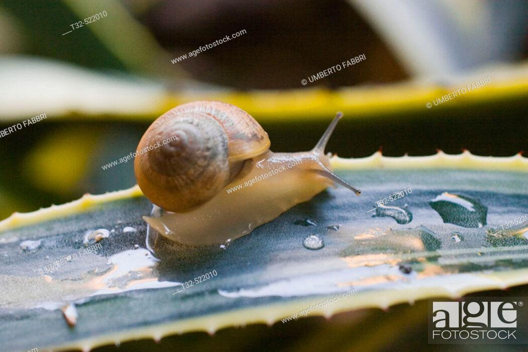 Stock Photo: Snail.