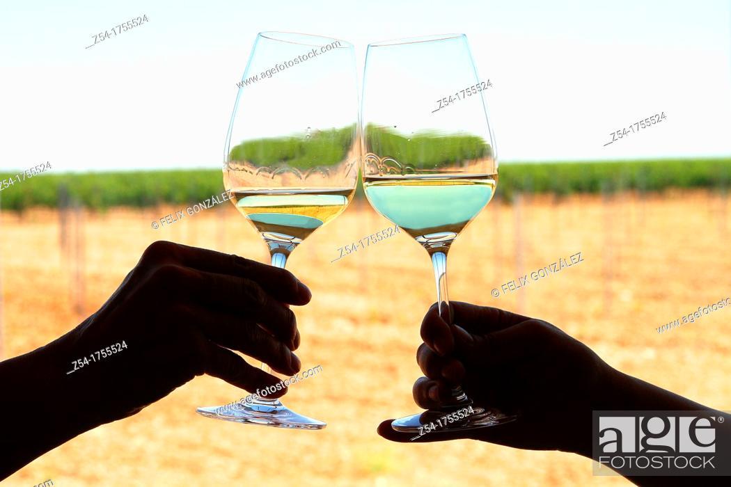 Stock Photo: Bodega taste room and cups of verdejo wine in Rueda, Castile and León, Spain.