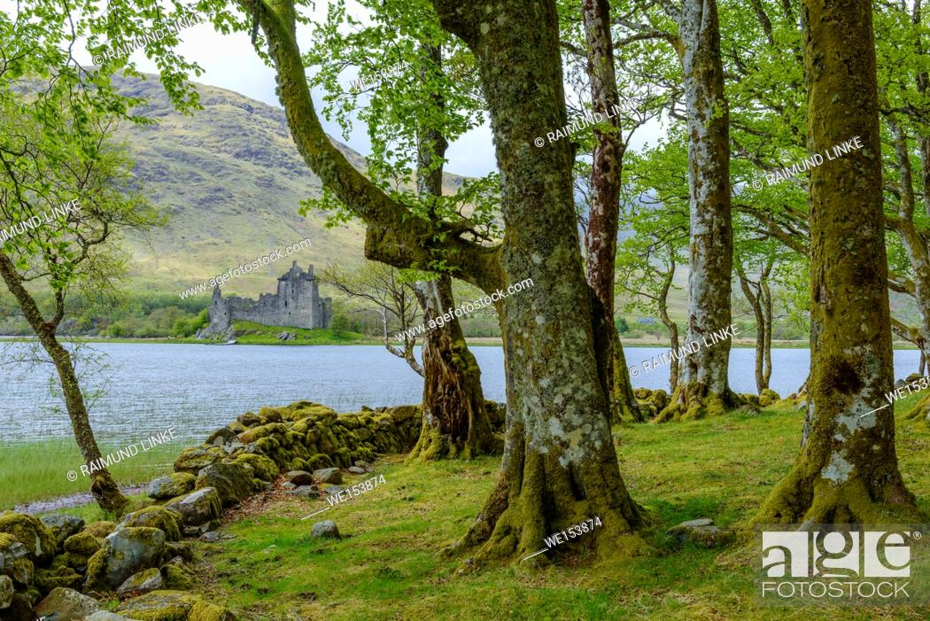 Photo de stock: Small beech forest at the edge of a lake with Castle Kilchurn, Loch Awe, Scotland, United Kingdom.