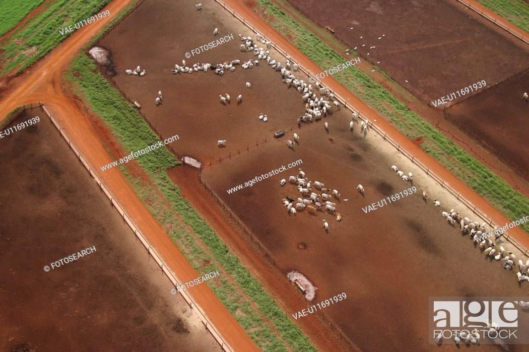 Stock Photo: agriculture, animals, aerial view.