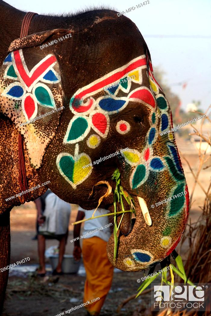 Colourful Drawings On Face Of Elephant Seen On Streets Of Ahmedabad