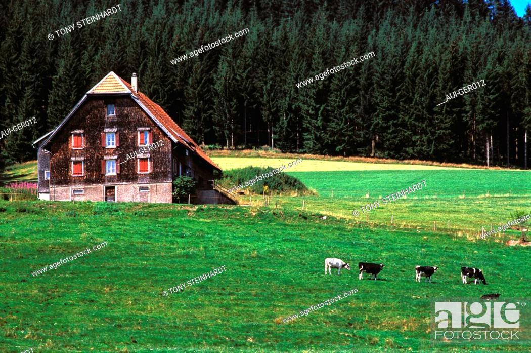 Stock Photo: Germany - Black forest - Landscape.