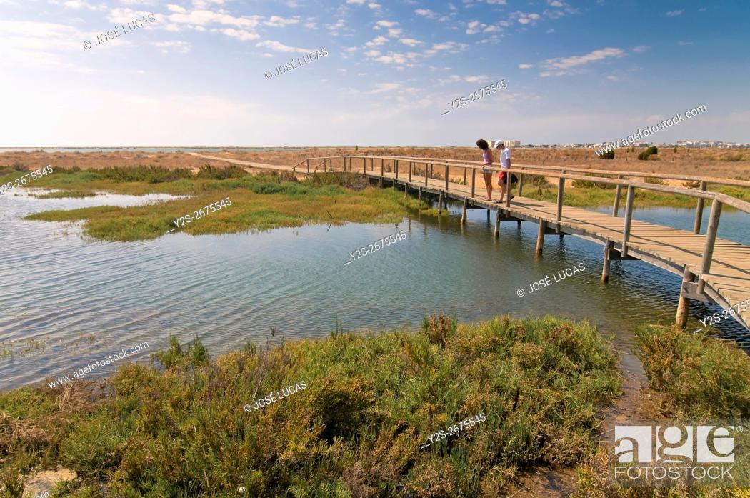 Stock Photo: The Odiel Marshes Nature Reserve, Huelva, Region of Andalusia, Spain, Europe.