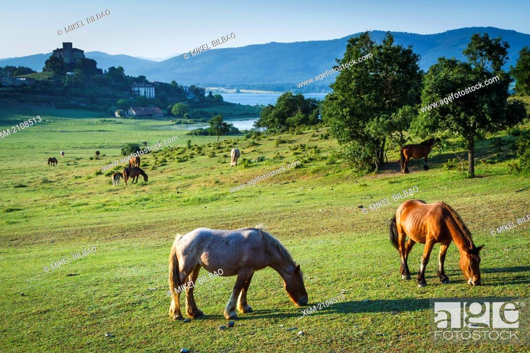 Stock Photo: grassland and horses. Nanclares de Gamboa, Ullibarri-Gamboa reservoir. Alava, Basque Country, Spain, Europe.