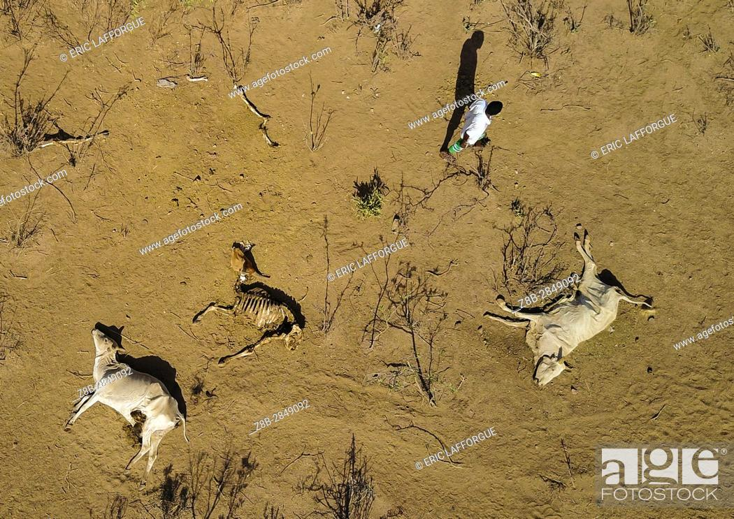 Stock Photo: Aerial view of dead cows during the drought, Oromia, Yabelo, Ethiopia.