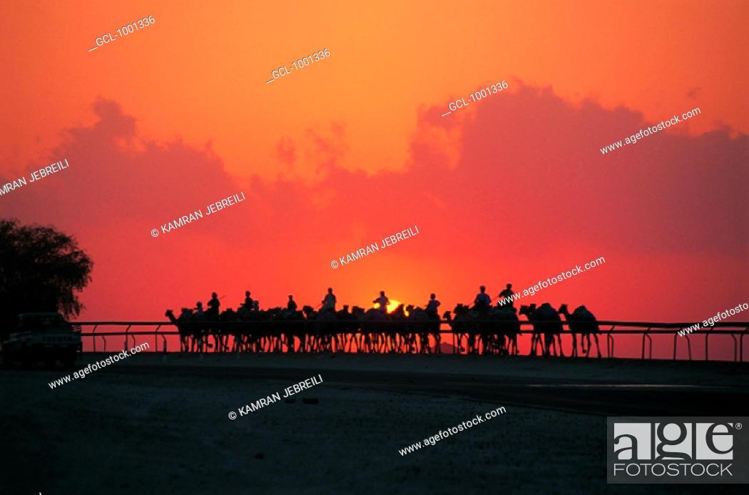 Stock Photo: Camel riders in Nad Al Sheba at sunset, UAE.