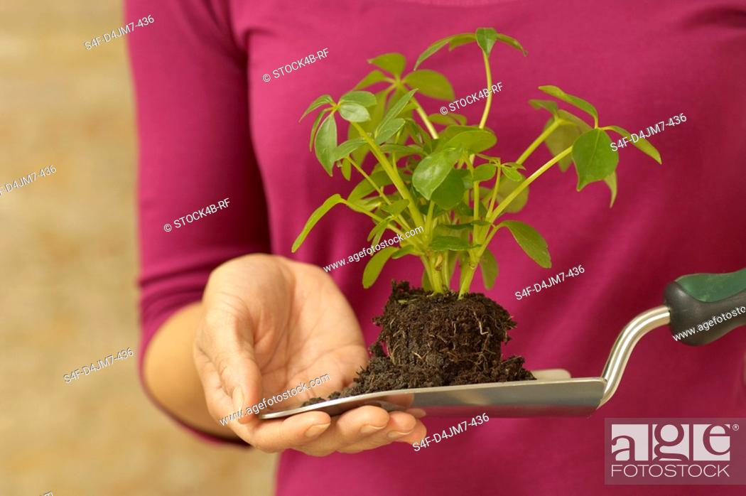 Stock Photo: Woman holding trowel with seedling.