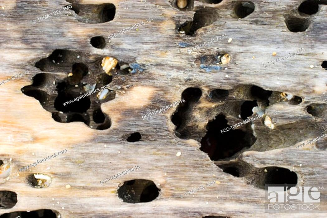 Stock Photo: Close-up of natural weathered driftwood.
