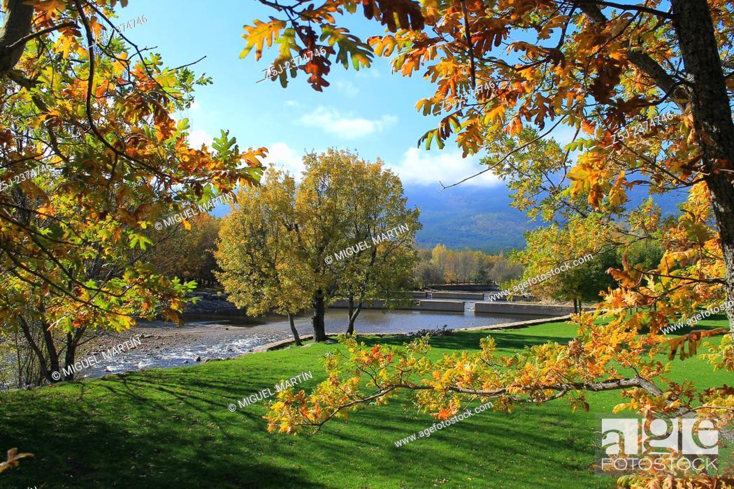 Stock Photo: Oak trees show Autumn colours at Las Presillas river pools on Lozoya river, near El Paular at Madrilenian side of Sierra de Guadarrama mountain range.