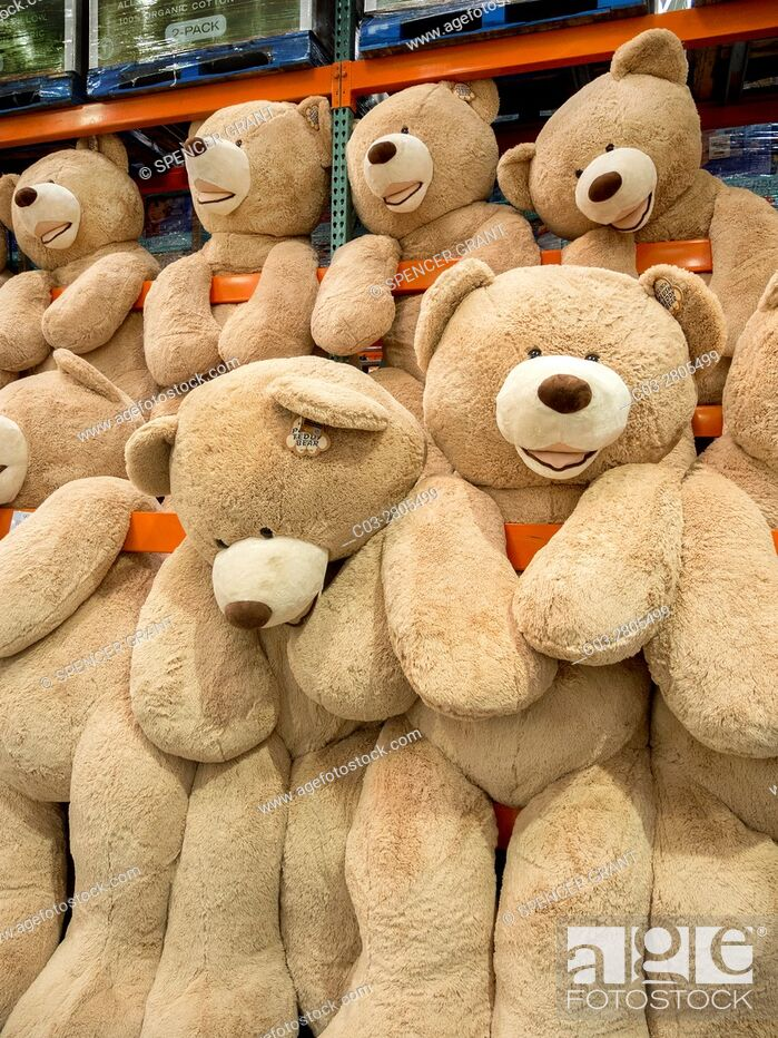 Stock Photo: Giant teddy bears are for sale at a display in a Laguna Niguel, CA, Costco big box store.