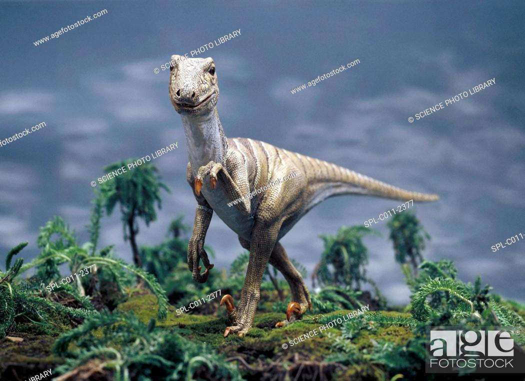 Stock Photo: Deinonychus dinosaur model. This carnivorous dinosaur lived around 144 million years ago. Fossil evidence has been discovered in Montana, USA.