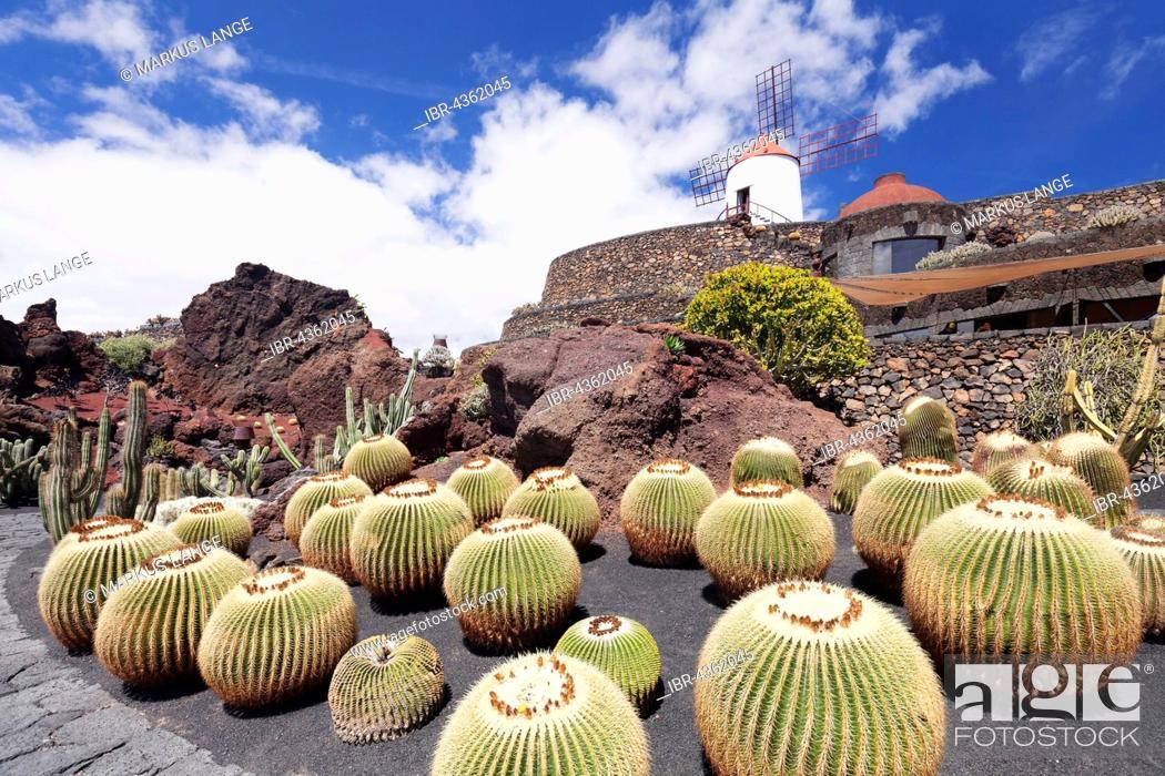 Cactus Garden Jardin De Cactus By Cesar Manrique Guatiza Lanzarote