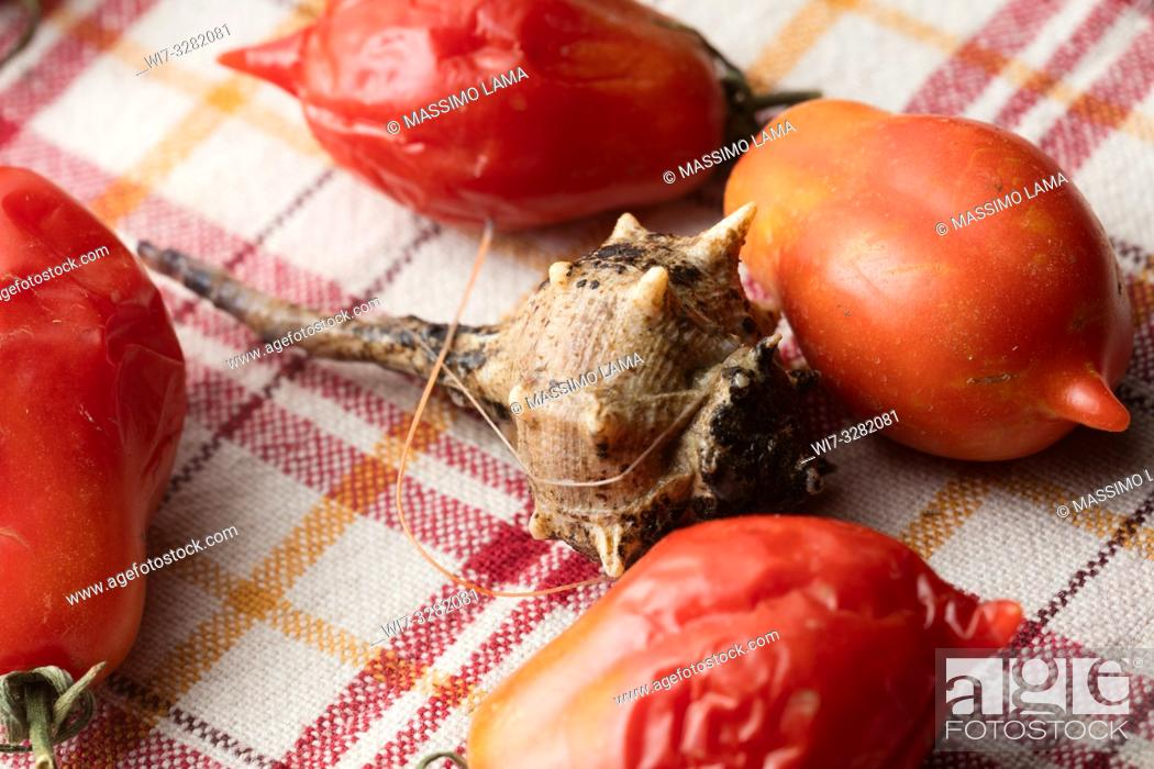 Imagen: Sea snail on backround with tomatoes, close-up.