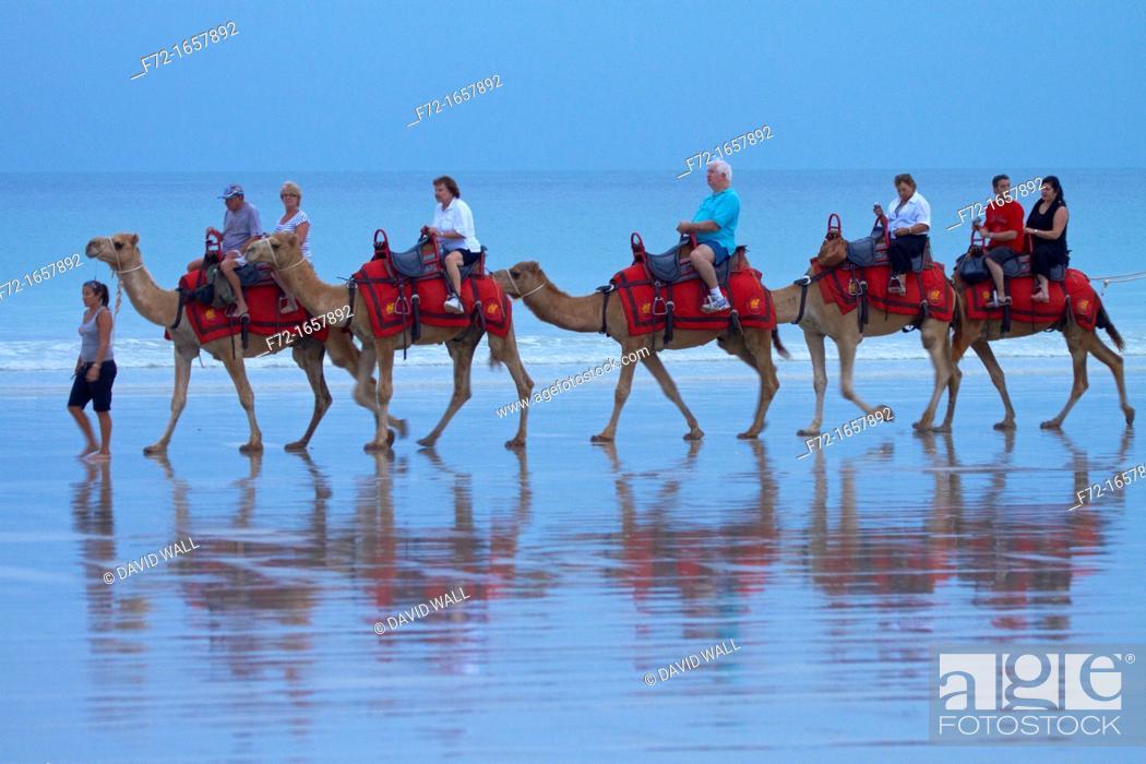 Stock Photo: Tourist camel train on Cable Beach, Broome, Kimberley Region, Western Australia, Australia.