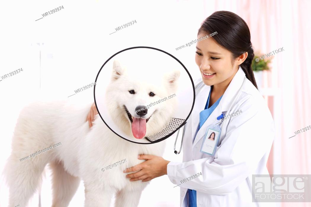 Stock Photo: Veterinary checks to make puppy.