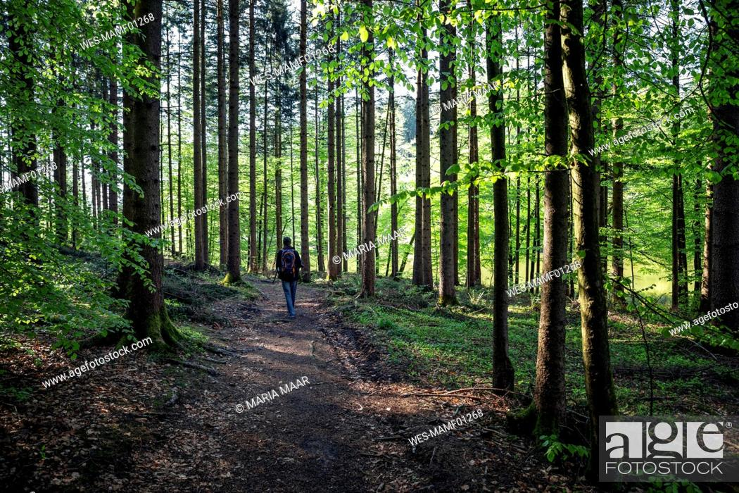 Stock Photo: Germany, Bavaria, Egling, Male hiker walking along forest footpath.