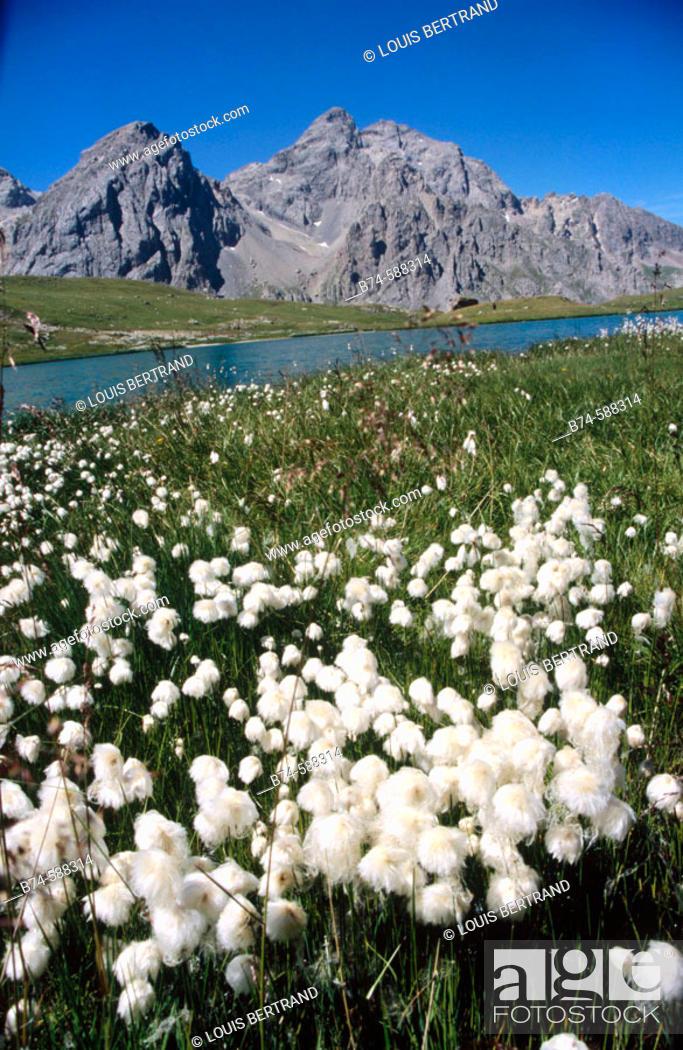 Stock Photo: Lac des Cerces. Savoie, France.