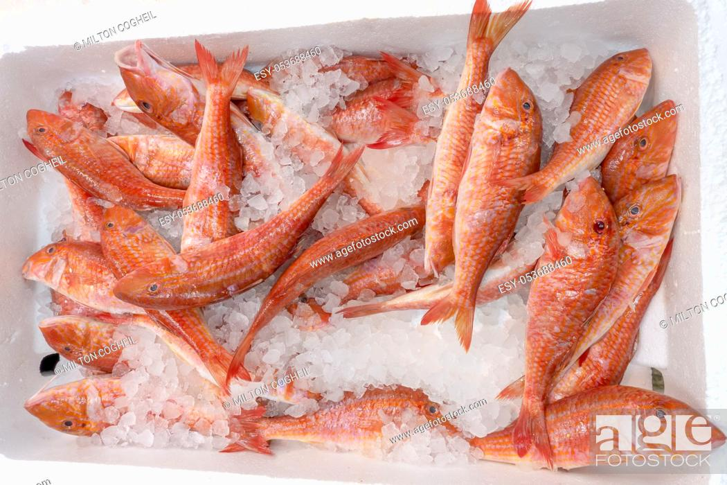 Stock Photo: Fresh red mullet for sale in a UK fishmonger market stall.