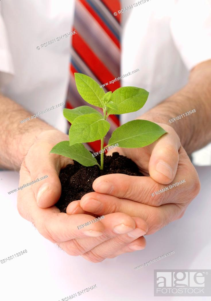 Stock Photo: Close-up of a businessman's hands cup a green plant.