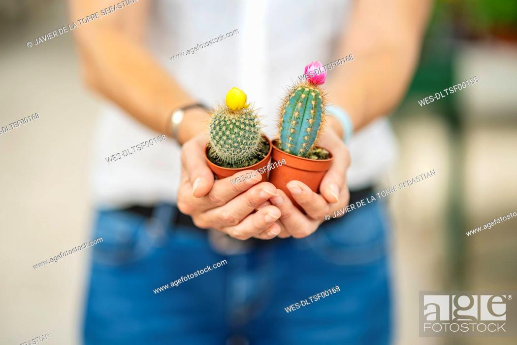 Stock Photo: Woman's hands holding cacti in plant nursery.