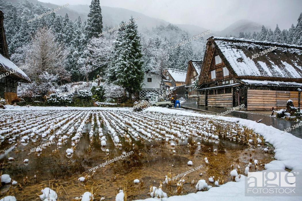 Imagen: Traditional gassho zukiri farmhouses. Shirakawago. Chubu region. UNESCO World Heritage. Japan.