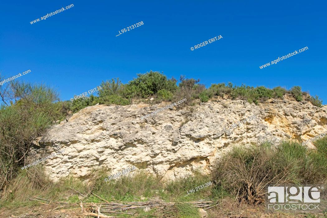 General view of a fossil coral reef, Sant Sadurní d'Anoia