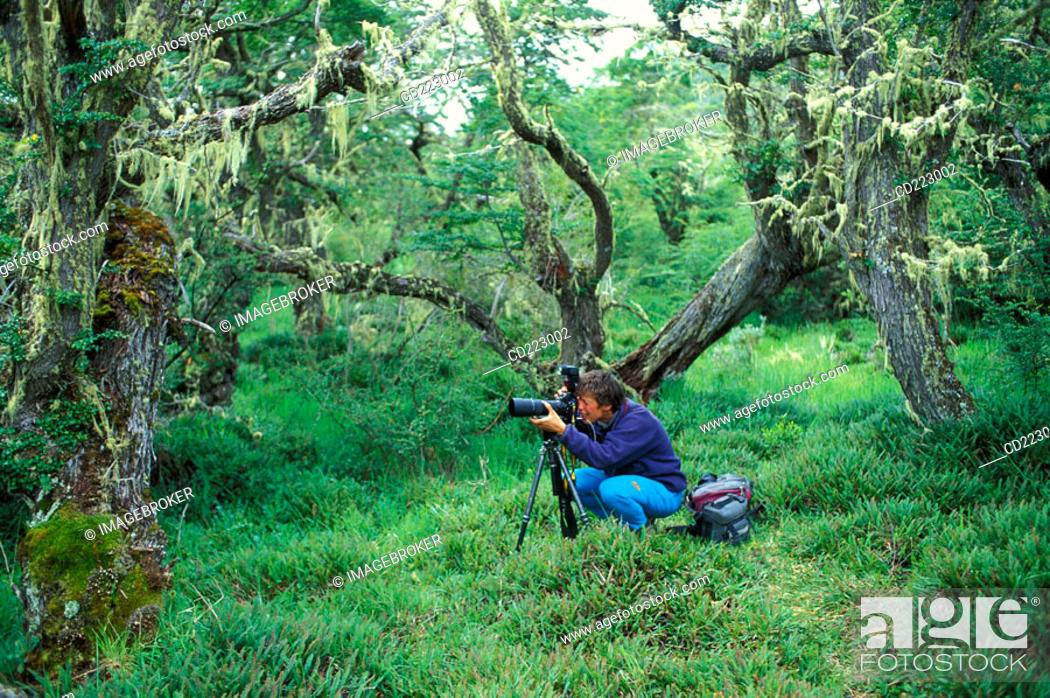 Stock Photo: Photographer in the forest at the Rio Serrano, Torres del Paine National Park, Chile.