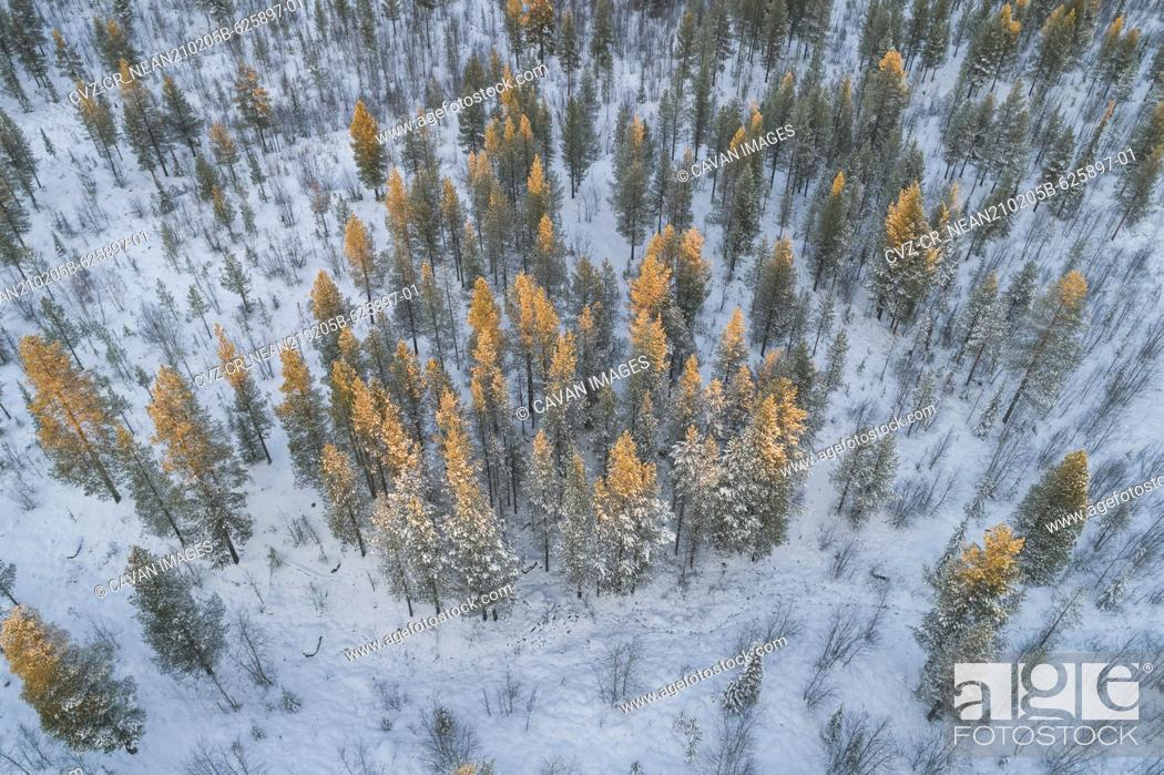 Stock Photo: snow covered nordic pine forest from aerial point of view.