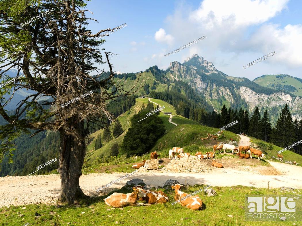 Photo de stock: Mt. Kampenwand in the Chiemgau Alps in upper bavaria. Europe, Germany, Bavaria.