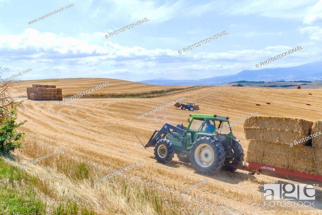 Stock Photo: Farmer collects bales of straw into a pile for easy transport. Photographed in Tuscany, Italy in Augusat.
