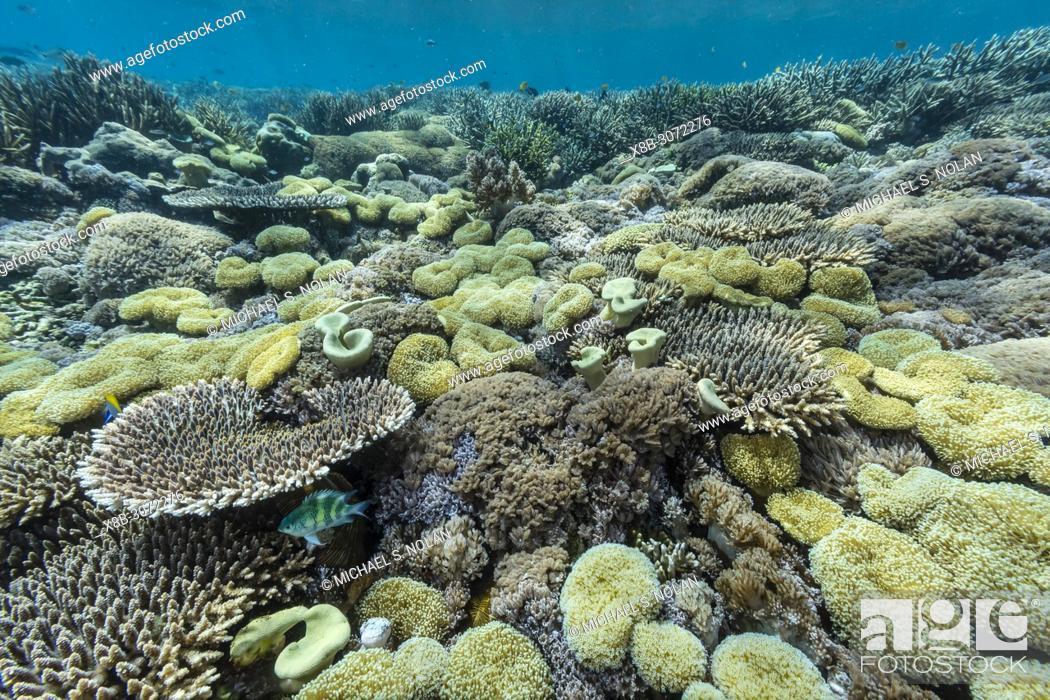 Stock Photo: A profusion of hard and soft corals on Sebayur Island, Komodo National Park, Flores Sea, Indonesia.