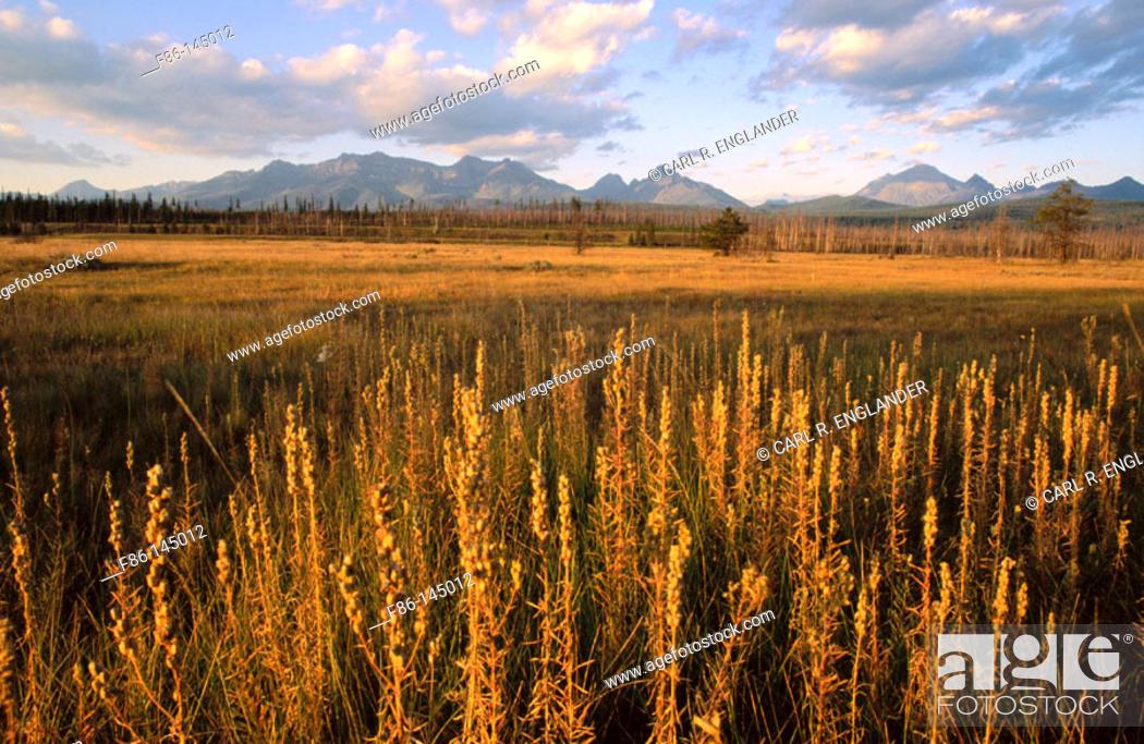 Stock Photo: Prairie and mountain peaks. Glacier National Park. Montana. USA.