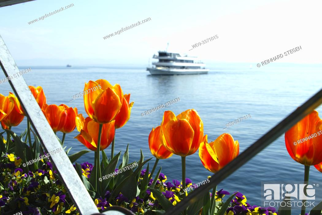 Imagen: Lake Constance in spring, blue sky and water, ship cruising, tulips in front.