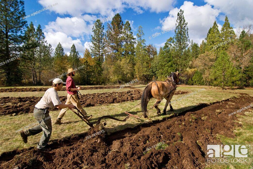 Stock Photo: Using draft horse to plow pasture into cropland, Burton Ranch, Nevada City, California.
