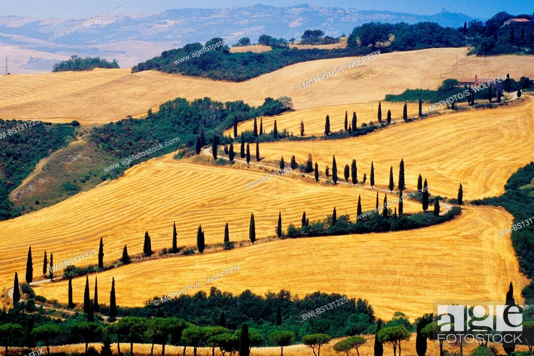 Stock Photo: country road winding through hilly field landscape, Italy, Tuscany, La Foce.