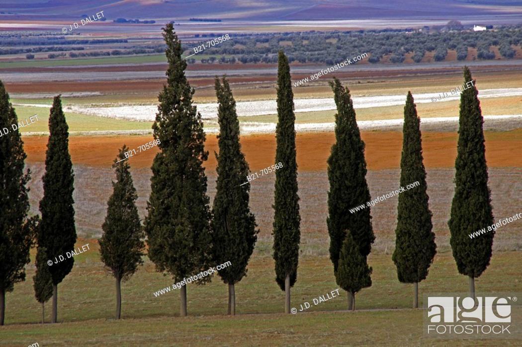 Stock Photo: La Mancha landscape near Santa Cruz de Mudela. Ciudad Real. Spain.