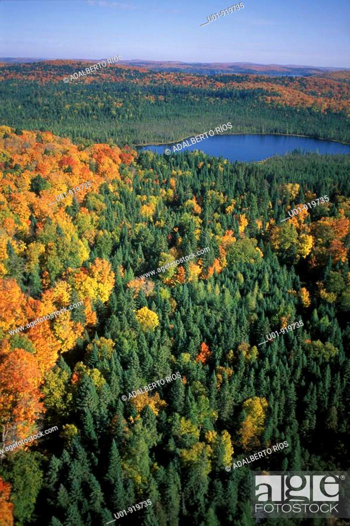 Stock Photo: Algonquin Provincial Park. Ontario. Canada.