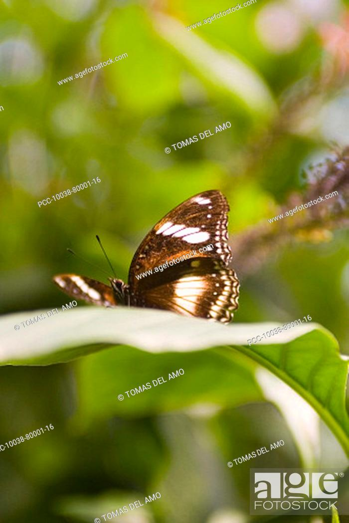 Stock Photo: A beautiful brown butterfly rests on a green leaf.