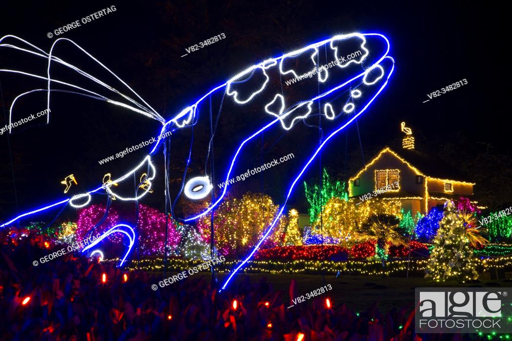 Stock Photo: Holiday Lights, Shore Acres State Park, Oregon.