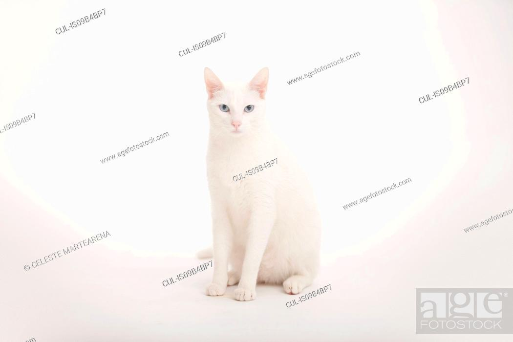 Stock Photo: Studio portrait of a white albino cat on white background.