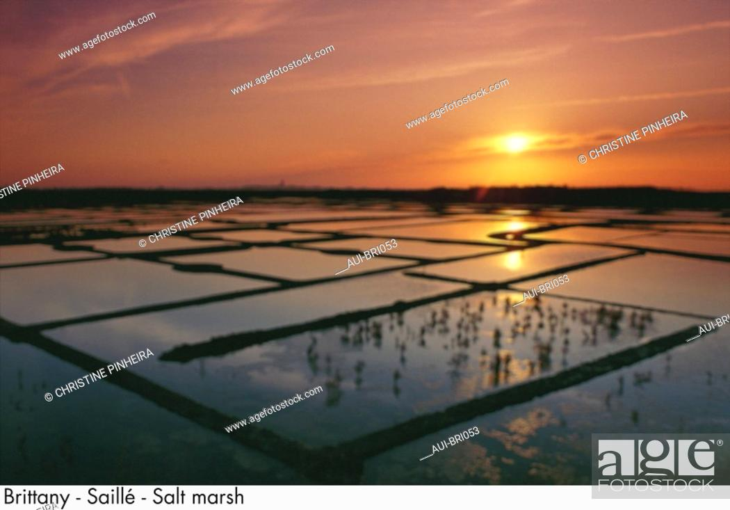 Stock Photo: Brittany - Saille - Salt marsh.