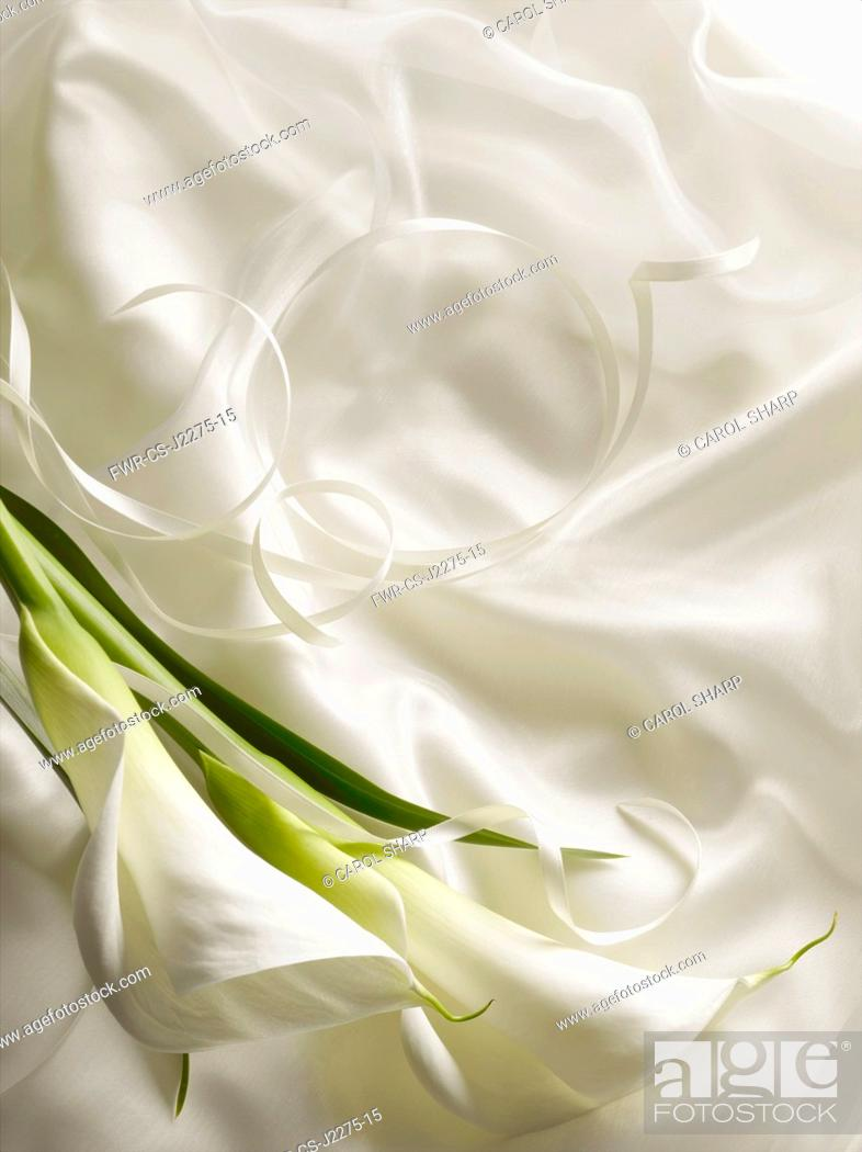 Imagen: Arum lily, Zantedeschia, Overhead graphic view of two flowers with leaf laid onto silky white fabric with ribbon creating a wedding style look.