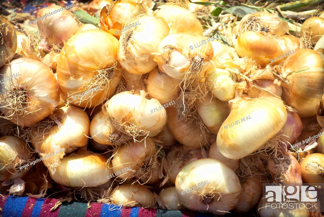 Stock Photo: Closeup of organic onions at a street market in the medina of Meknes, Morocco, Africa.